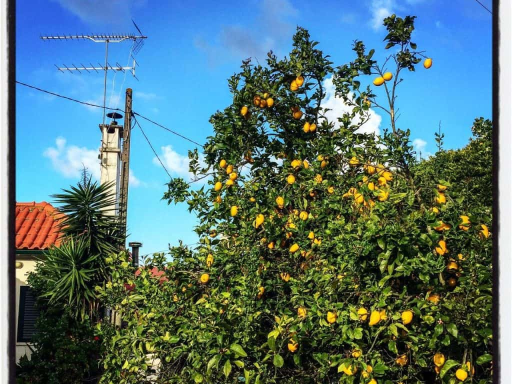 Eukalyptus & Citron